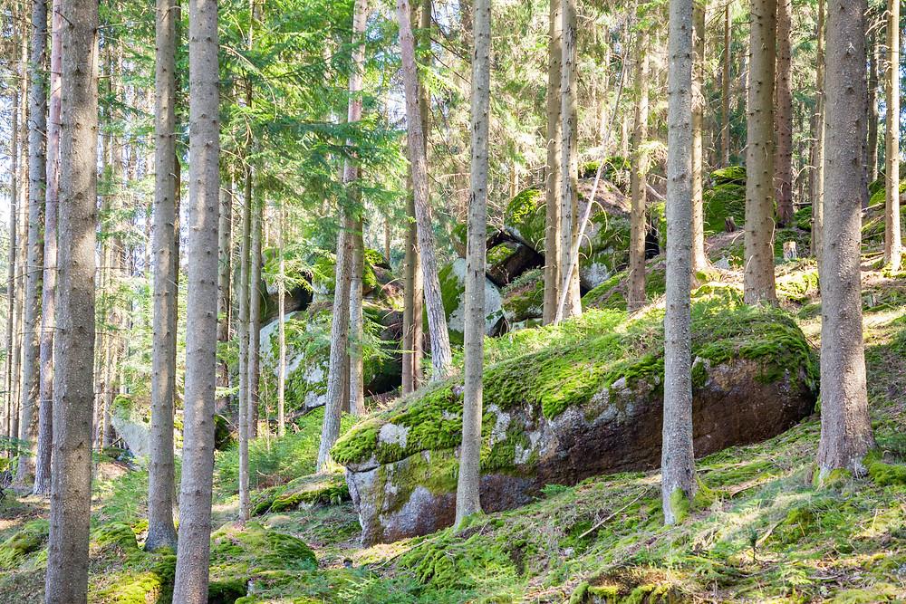Waldviertel, Steine, Granit, Moos, Wald, Wackelsteine, Wandern, Wanderung