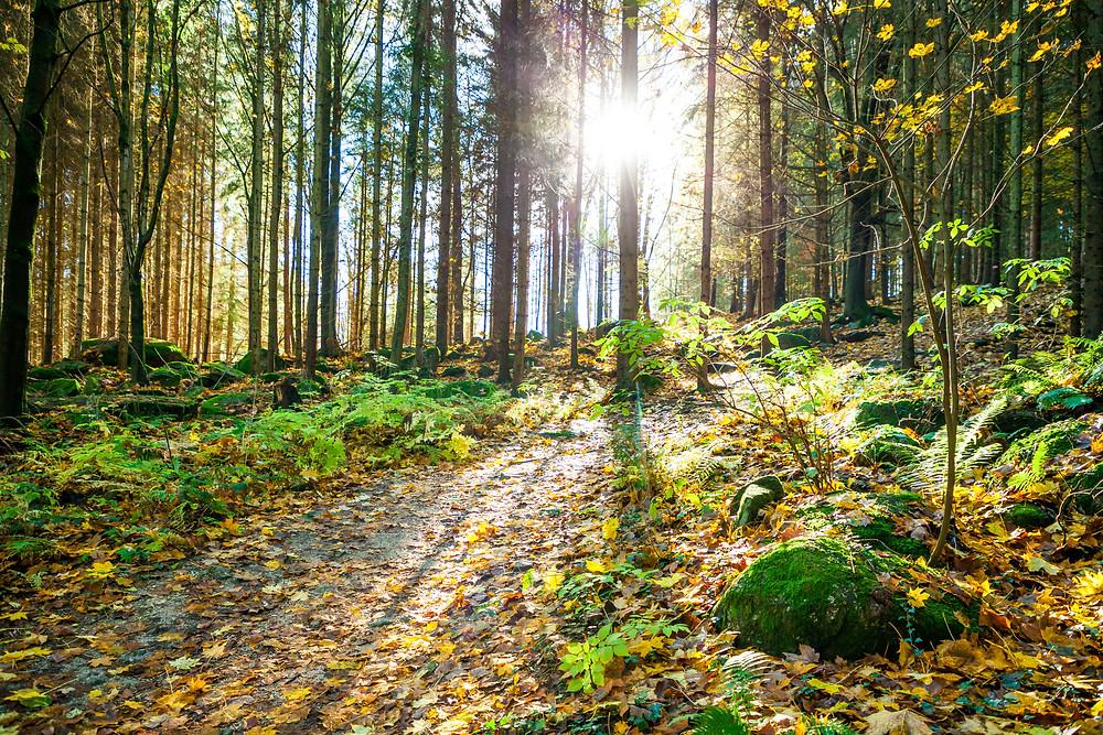 Nebelstein, Waldviertel, wandern, Wanderung, Niederösterreich, Wanderurlaub, Wanderreise, Herbst, Wald, Sonnenlicht, Herbstlaub