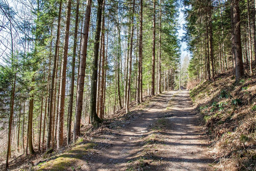 Waldweg, Fichtenwald, Schneerosenwarte, Lilienfeld, Niederösterreich, Mostviertel, wandern, Wanderung