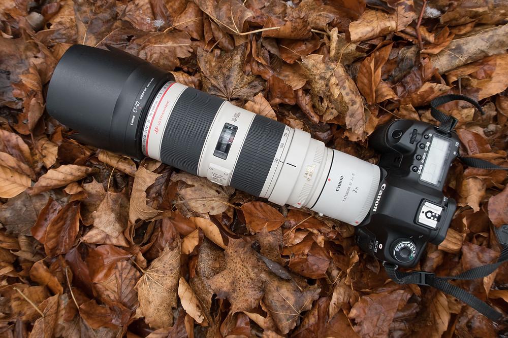 Canon EOS 5D Mark II, Canon EF 70-200 f /2.8 IS II und Canon Extender EF 2x III im Laub am Waldboden
