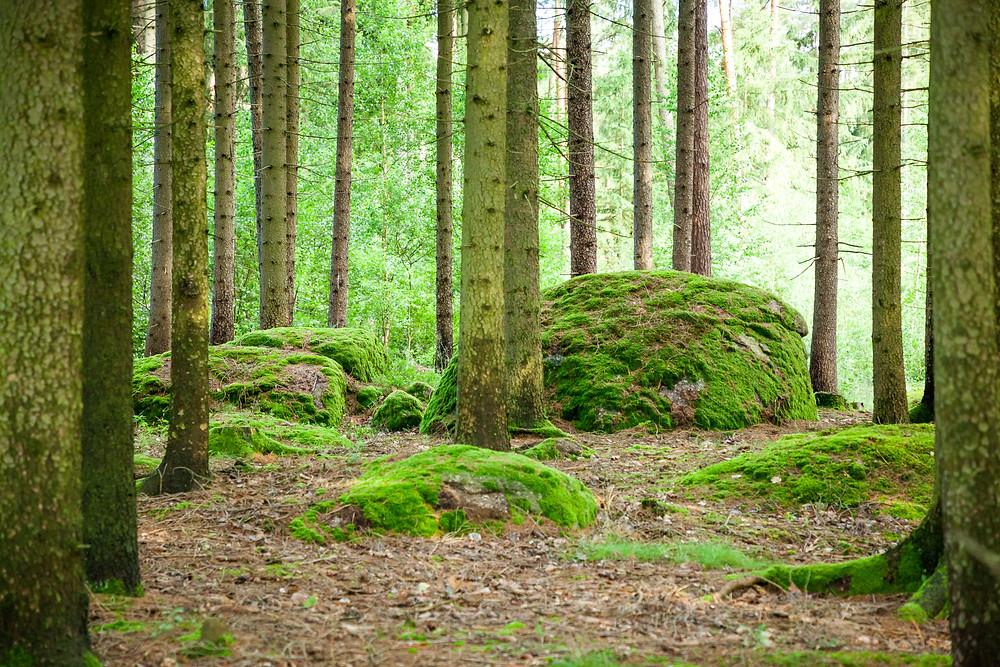 Wackelstein, Granit, Steine, Teich, Karpfenteich, Fischteich, See, Gmünd, Waldviertel, Niederösterreich, Wandern, Wanderung, Ausflug.