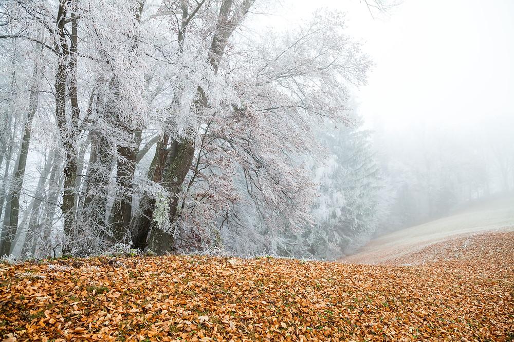 Kaiserkogel, Eschenau, Pielachtal, Traisental, Alpenvorland, Niederösterreich, Wandern, Wanderung, Winterwandern, Winterwanderung,