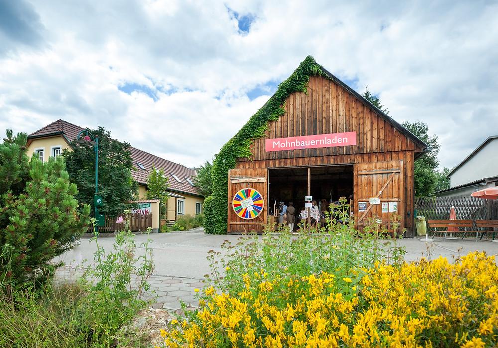 Mohnleutweg, Mohndorf, Armschlag, Mohnfelder, Mohnblüte, Waldviertel, Wald4tel, Niederösterreich, Wandern, Wanderung, Ausflug, Mohnbauernladen