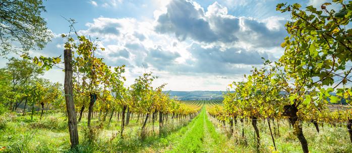 Wandern Weinviertel: durch die Weinberge rund um Großwetzdorf
