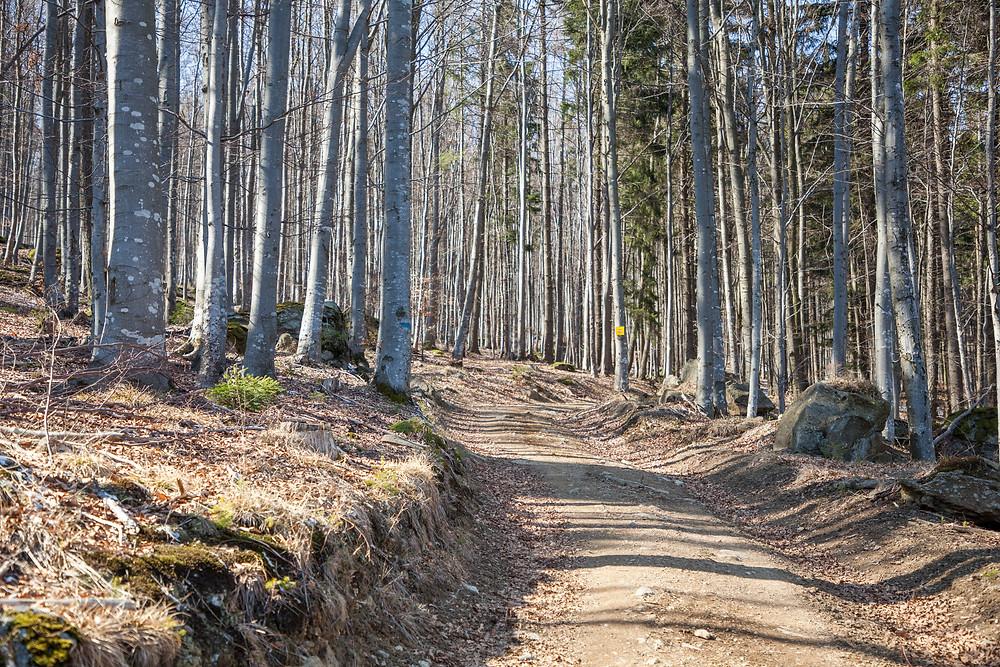 Kleiner Peilstein, Peilstein, Waldviertel, Niederösterreich, Wandern, Wanderung, Waldweg, Buchenwald, Frühling