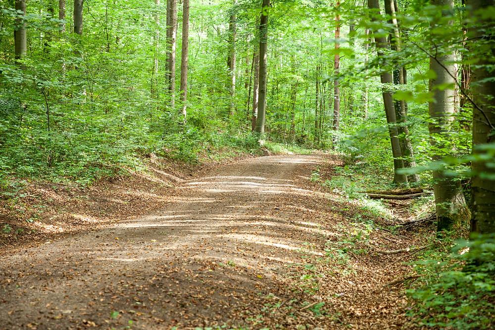 Wald, Laubwald, Waldweg, Wandern, Wanderung, Wienerwald