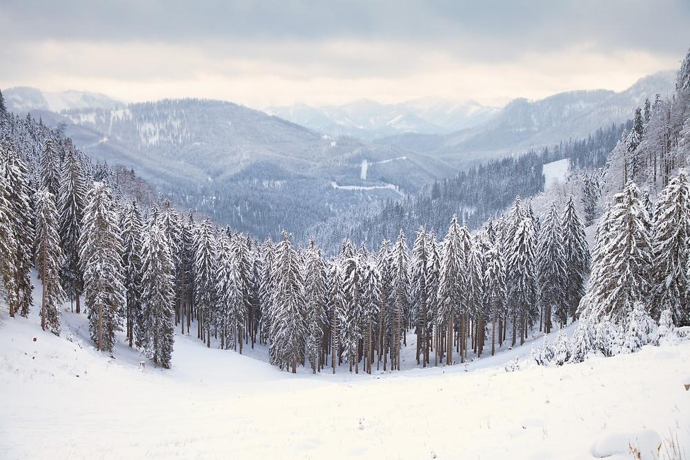 Tirolerkogel, Annaberghaus, Alpen, Wanderung, Wandern, Wanderweg, Winterwandaerung, Winterwandern, Schnee, Winterwald