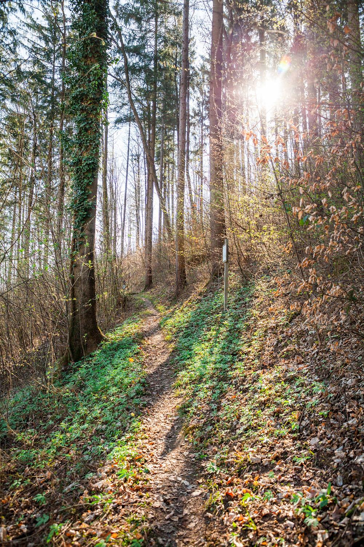 Waldweg, Wanderweg, Ruine Rabenstein, Pielachtal, Niederösterreich, Wandern, Wanderung