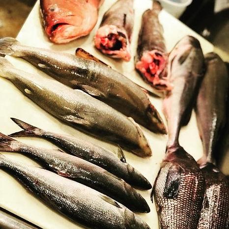 fresh fish on table