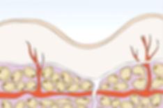 tessuto linfatic