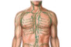 linfa tronco superiore