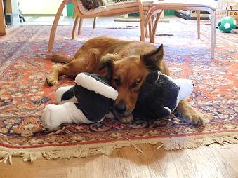 UR with husky toy.JPG