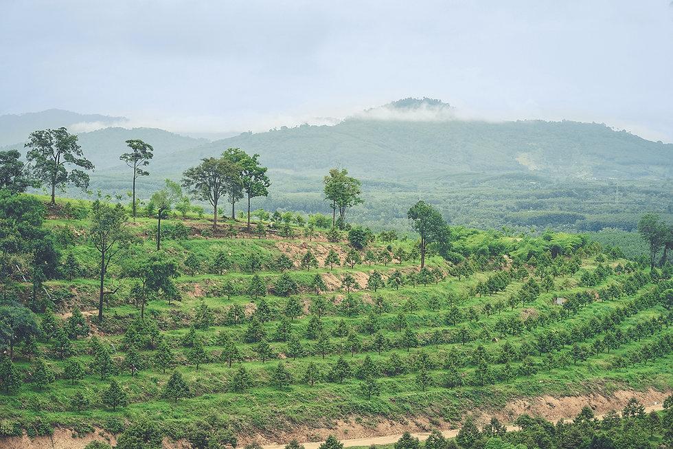 Plantation Investment Opportunity.JPG