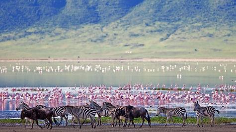 Africa Safari Land For Sale