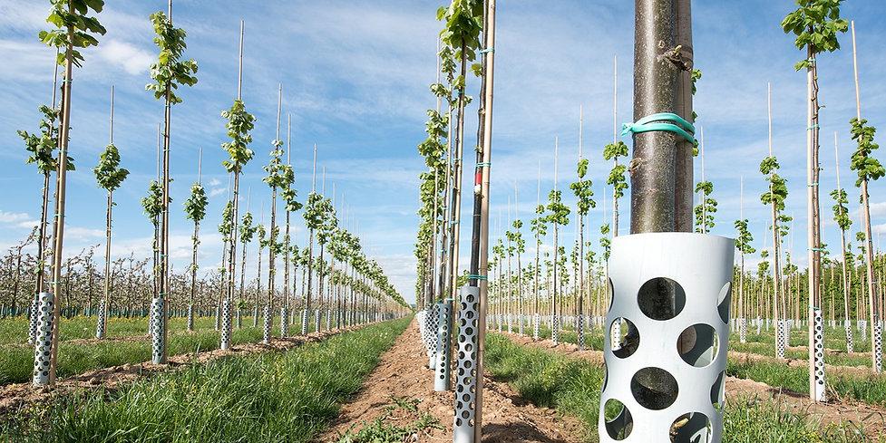 Plantation Investment.jpg