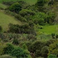 Te Arai BioFarma continues environmental restoration