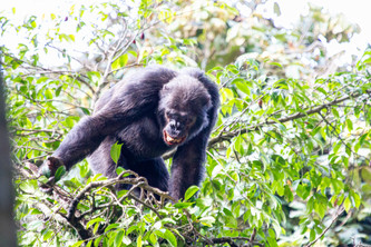 29 - Chimpanzee. Your closest relative.