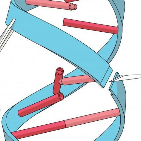 CRISPR: The Future