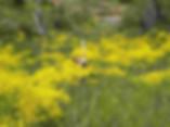 yoga coruña flor de tila hatha