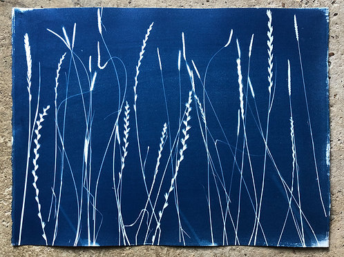 Rochester Riverside Cyanotype / Salt Marsh Plants No 12
