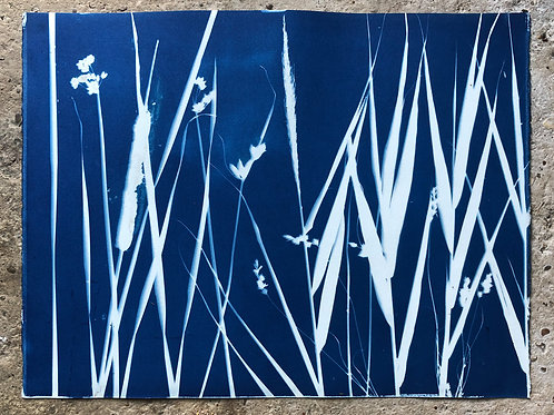 Rochester Riverside Cyanotype / Salt Marsh Plants No 14