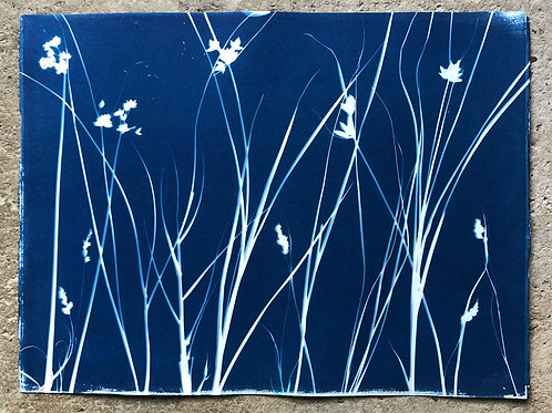 Rochester Riverside Cyanotype / Salt Marsh Plants No 6