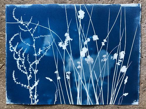 Rochester Riverside Cyanotype / Salt Marsh Plants No 10