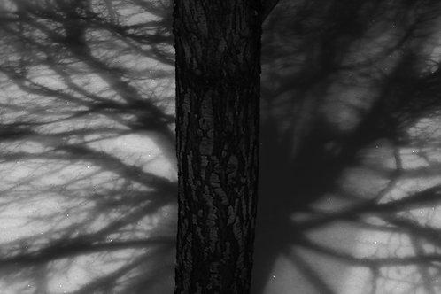 Santa Fe / Twilight Series No 2/10