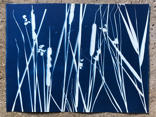 Rochester Riverside Cyanotype / Salt Marsh Plants No 11