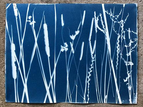 Rochester Riverside Cyanotype / Salt Marsh Plants No 13