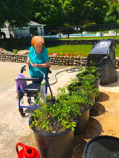 Joan Watering Tomatoes vibrant.jpg