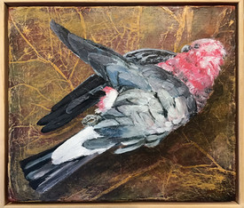 Galah (dead bird series)