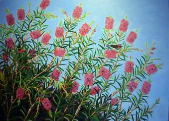 Callistemon with Scarlet Honeyeaters