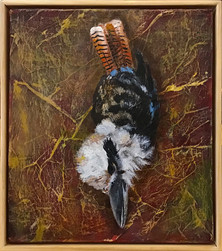 Kookaburra (dead bird series)