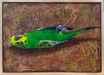 Budgie (dead bird series)