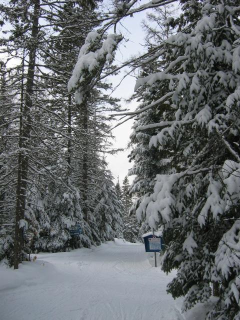 Sentier d'hiver