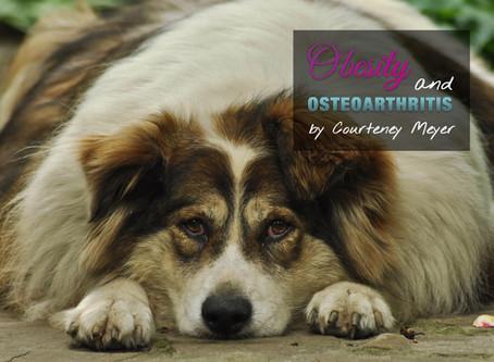 Obesity & Osteoarthritis in Pets