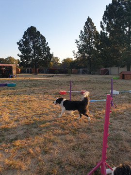 SS Doggie Park Obstacles.jpg