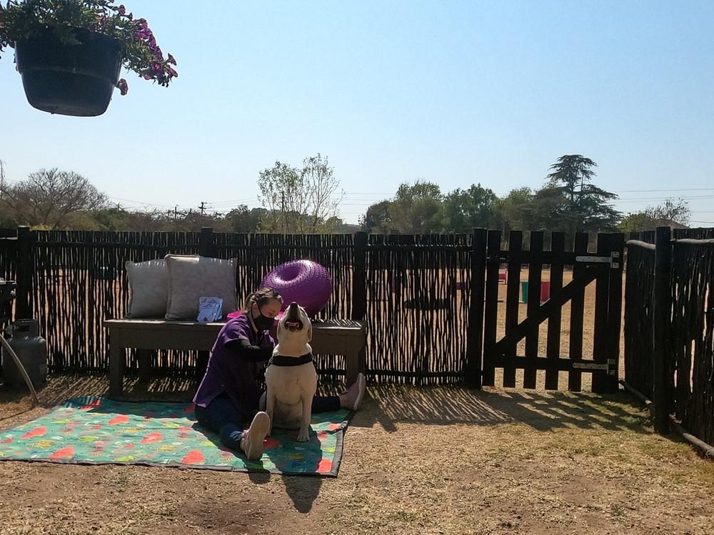 Shaggy Chic ; Courteney Meyer ; Dog Park ; Kennel ; Boarding ; Day Care ; Veterinary Physiotherapist ; Dog Walk ; Canine Massage