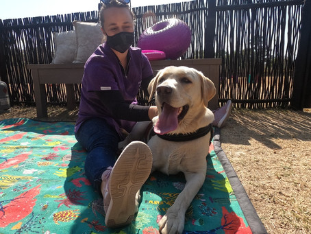 Walkies & Massage Special - Happy Clients
