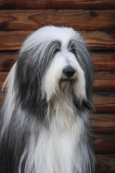 Shaggy Chic ; Dog ; Daycare ; Kennel ; Boarding ; Park ; Groomer ; Grooming ; Kennels