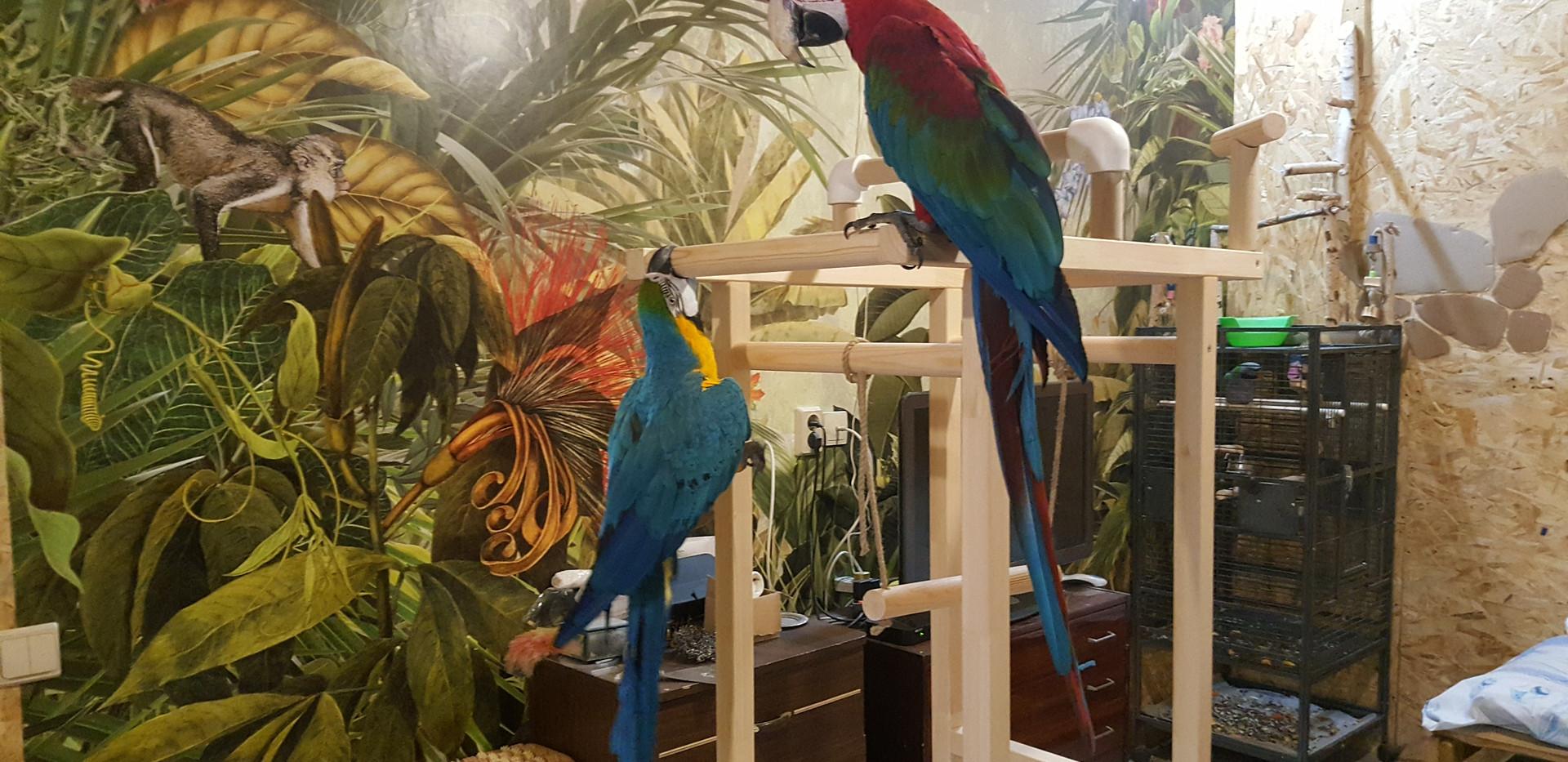 попугаи ара играют на стэнде