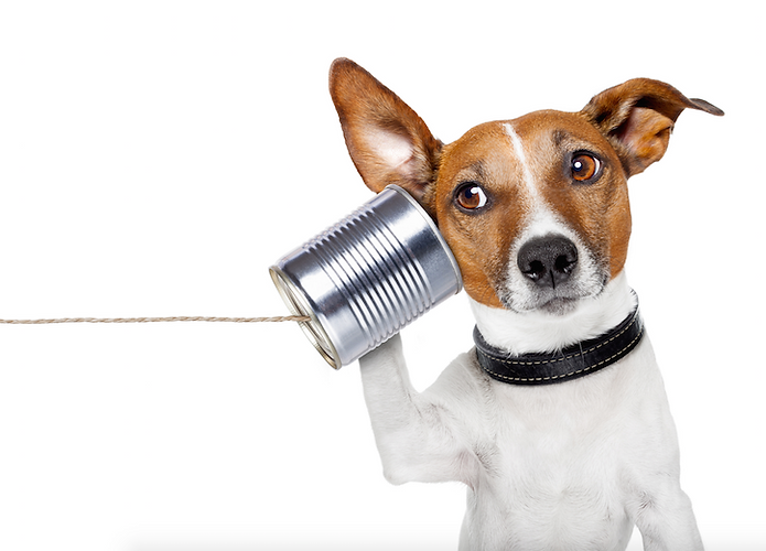 Dog-holding-phone.png
