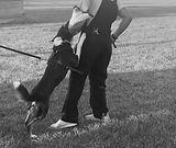 Schutzhund.jpg