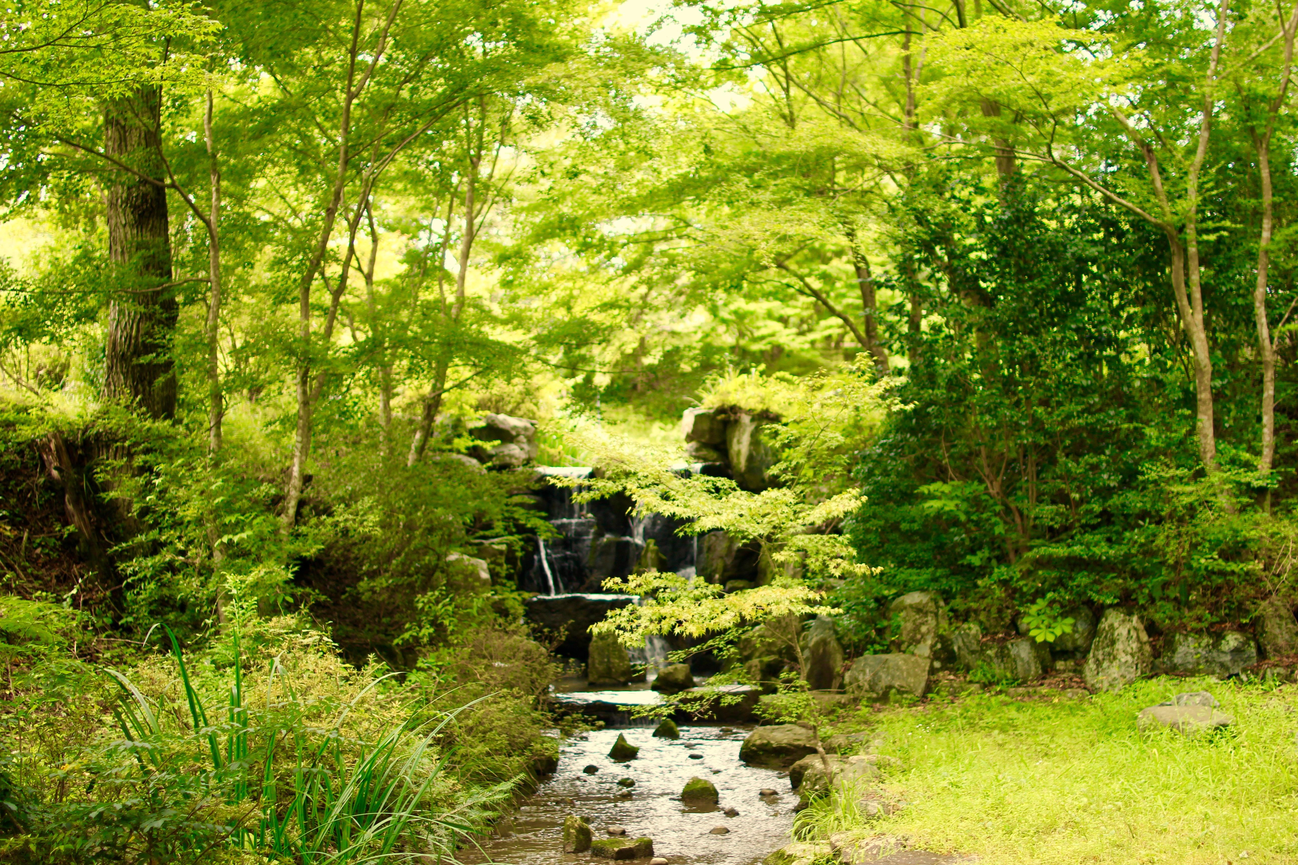 Resort's waterfall