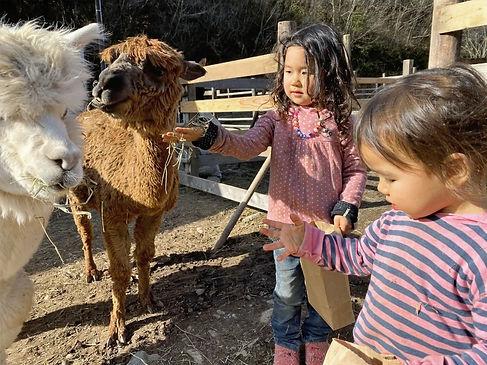 alpaca.2.jpg