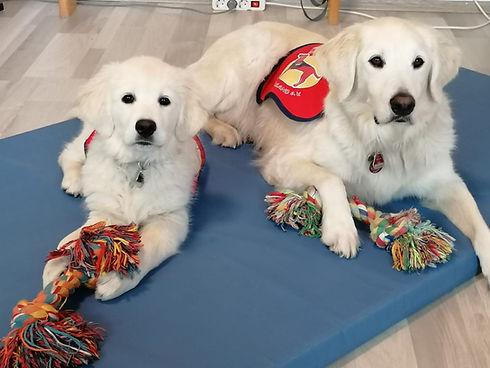 Therapiehunde Ergotherapie Witten