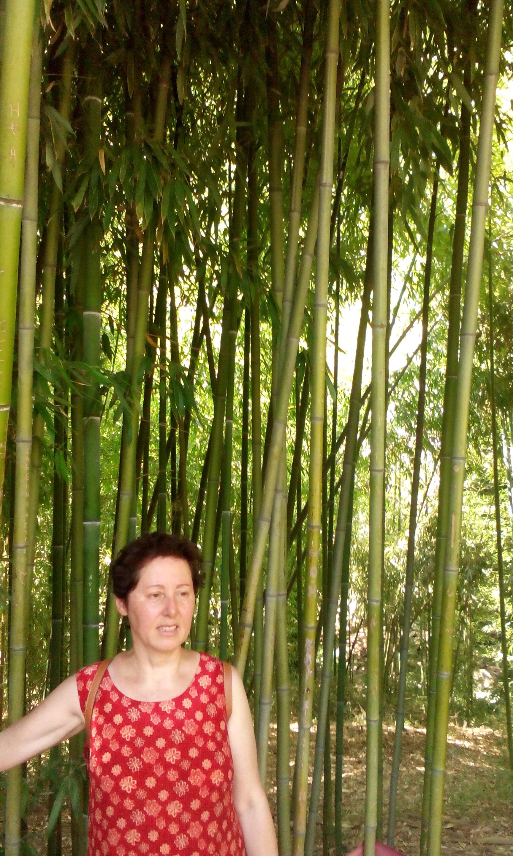 Ботанический сад Тбилиси...бамбуковая роща