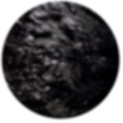 schwarz2014.jpg