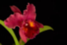 orchids9061lres.jpg